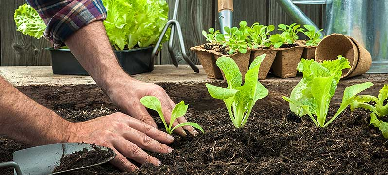 Planting Tips: Which Type of Soil Should You Use?