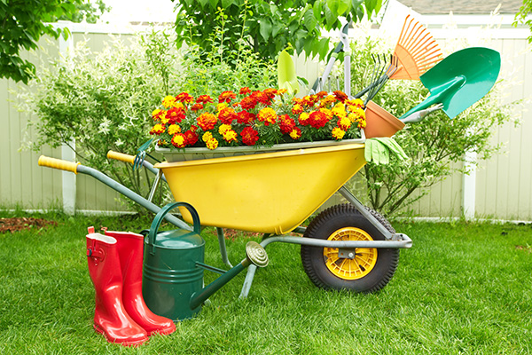 Plants, Flowers, Soils and Mulches